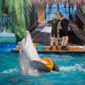Дельфинарии, океанариумы Железноводска