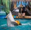 Дельфинарии, океанариумы в Железноводске